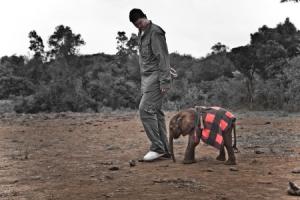 Yao Ming baby elephant