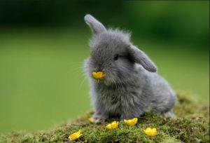 Cruelty-Free Bunny