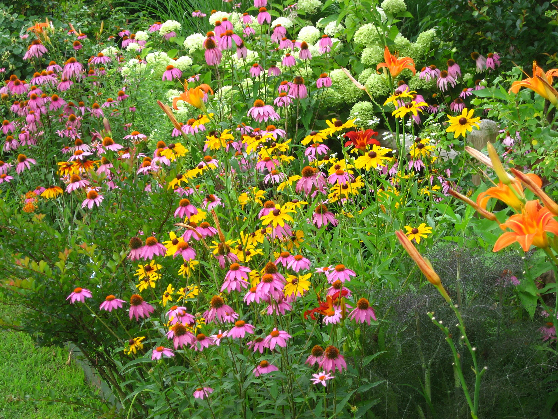 butterfly garden – Plants for a Butterfly Garden