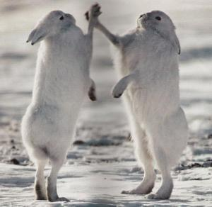 High Five Bunnies