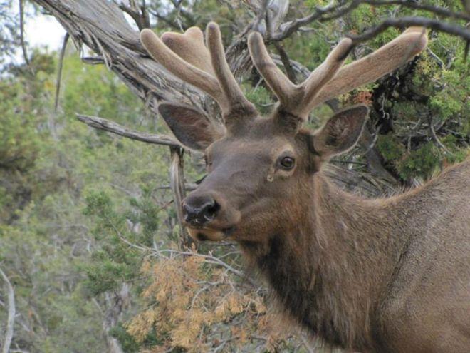 boy elk